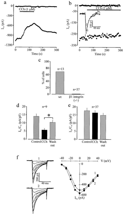 Muscarinic modulation of basal ICa is absent in β1 integrin−/− ES cell–derived cardiomyocytes. (a) Time course of peak ICa in a representative wt EDS ES cell–derived cardiomyocyte. Prominent inhibition of basal ICa was observed after application of carbachol (1 μM). The CCh effect could be reversed by washout. Each data point in the time course was evoked by a 20-ms depolarization from a holding potential of −50 mV to a test potential of 0 mV. The upper trace indicates the holding current. (b) A representative β1 integrin−/− EDS cardiomyocyte demonstrates the absence of the CCh-induced inhibition of basal ICa (50 ms depolarization from −50 mV to 0 mV). The time of current recordings (1 and 2, inset) is indicated. (c) Percentage of wt and β1 integrin−/− cardiomyocytes displaying CCh-induced inhibition of basal ICa. (d) ICa density in wt cells with CCh response. (e) ICa density in β1 integrin−/− cells in absence and presence of CCh. (f) Traces (left) and I/V relationship (right) of ICa recorded in an ES cell–derived EDS β1 integrin−/− cardiomyocyte (1, control; 2, in presence of CCh). ICa was evoked by 50-ms depolarizations from −40 mV to +40 mV in 10-mV increments (holding potential, −50 mV). *Indicates statistical significance (paired t test, p-value < 0.05).