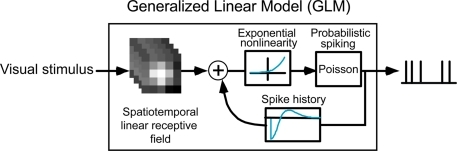 "The generalized linear model (GLM). See ""Materials and Methods"" for details."
