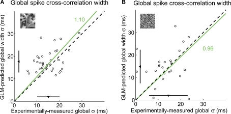 The GLM globally captures the fine timing precision across cells. (A) Global spike cross-correlation width in response to natural scenes, as predicted by the GLM versus as measured in experimental data (correlation coefficient: r = 0.41). For each pair, the spike cross-correlation width is the standard deviation of the Gaussian that best fits the (global) spike cross-correlation function. A fitted line (green) and the corresponding proportionality coefficient are shown, computed between the cross-correlation width predicted by the GLM and that measured experimentally using a least-mean-square fit on all data points. The mean ± standard deviation are represented along each axis by an arrowhead and bar. The dashed line has unity slope. (B) Global spike cross-correlation width in response to spatiotemporal white noise, as predicted by the GLM versus measured in experimental data, in all pairs in which there was a measurable hump in the cross-correlation for this class of visual stimuli (n = 24 pairs). Same conventions as in (A).