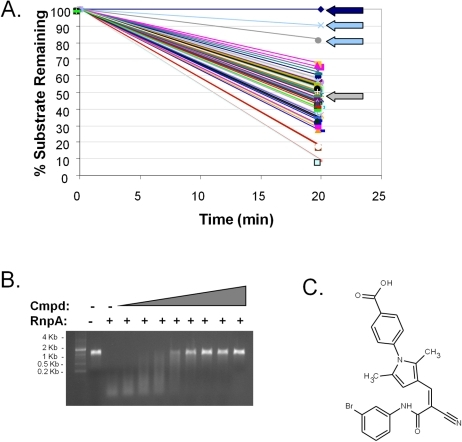 Identification of small molecule inhibitors of RnpA-mediated RNA degradation.(A) Representative screening effort results; dark blue arrow indicates substrate alone (negative control); grey arrow indicates enzyme (positive control); light-blue arrows indicate compounds that inhibited RnpA activity by ≥50%. (B) An agarose gel-based assay was used to distinguish bona-fide RnpA inhibitors from primary screening artifacts. Shown is the gel mobility of molecular weight marker, spa mRNA in the absence (−) or presence (+) of 20 pmol RnpA and RnpA-mediated spa mRNA degradation in the presence of increasing concentrations of RNPA1000, as described in Materials and Methods. (C) Structure of RnpA-inhibitory molecule RNPA1000.