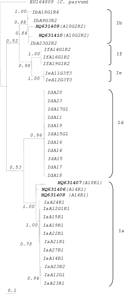 Phylogenetic analysis of gp60 sequence data representing Cryptosporidium hominis from HIV patients using Bayesian inference (BI).Sequence from the present study as well as reference sequences representing C. hominis subtypes (acquired from GenBank) are indicated. Posterior probabilities are indicated at all major nodes. C. hominis genotype Ia accession numbers HQ631406 and HQ631408 and genotype Ib accession numbers HQ631409 and HQ631410 have been reported in another publication by our group [12].