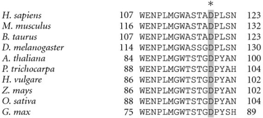 Sequence alignment of NDUFS4 homologues from different organisms showing the high conservation in the flanking region of D119. The amino acid sequence of Homo sapiens (accession no. NP_002486.1), Mus musculus (accession no. NP_035017.2), Bos taurus (accession no. DAA17925.1), Drosophila melanogaster (accession no. NP_573385), Arabidopsis thaliana (accession no. Q9FJW4), Populus trichocarpa (accession no. XP_002310893), Hordeum vulgare (accession no. BAK01929), Zea mays (accession no. NP_001132398), Oryza sativa (accession no. NP_001060126) and Glycine max (accession no. NP_001235335) are shown. Alignment was performed by using the CLUSTALW2 method (Protein Weight Matrix Blosum, clustering NJ) (http://www.ebi.ac.uk/Tools/msa/clustalw2/). The conserved Asp residue is shown in grey.