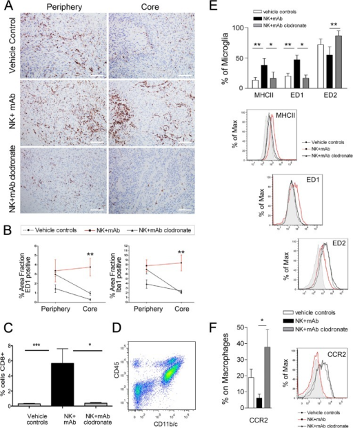 Increased recruitment of ED1+ activated macrophage/microglia in NK+mAb9.2.27 treated tumors(A) ED1 labeling in P3-30 bearing animals in the tumor core vs. periphery in vehicle control, NK+mAb9.2.27 combination and NK+mAb9.2.27+clodronate treated animals, (scale bar 100 μm, magnification 200 X). (B) The quantification of positive area fraction for ED1 and Iba1 in tumor core and periphery in vehicle control, NK+mAb9.2.27 combination and NK+mAb9.2.27+clodronate treated animals. (C) Quantification of CD8+ area fraction in vehicle control, NK+mAb9.2.27 combination and NK+mAb9.2.27+clodronate treated animals (D) Flow cytometric representative dot plot showing the gating of cell populations from rat brain cell suspension expressing CD11b/c and CD45, permitting the differentiation of macrophages (CD45highCD11b/c+) and microglia (CD45lowCD11b/c+). (E) Upper panel, % microglia cells expressing MHC class II, ED1 and ED2. Lower panels, mean fluorescence intensity histograms as % of Max of data in (E). (F) Percentages of CCR2+ macrophages (right) and mean fluorescence intensity as % of max for CCR2 (left). The data in (B), (C), (E) and (F) represent mean ±SEM from all tumors in the groups, ***p<0.001, **p<0.01 and *p<0.05.
