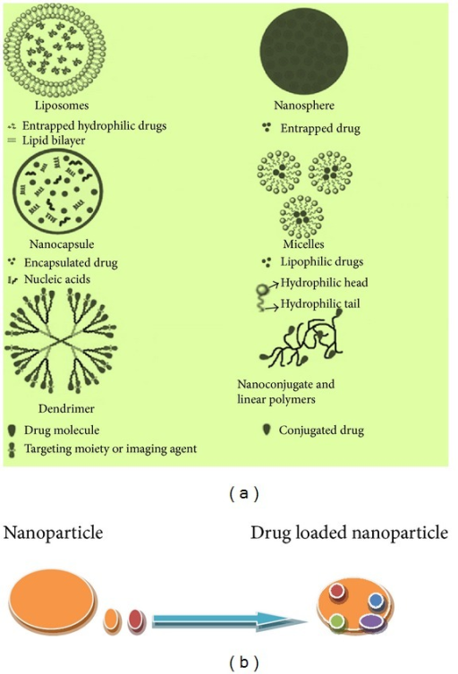 (a) Showing structures of different types of drug delivery vehicles, (b) a drug loaded nanoparticle.