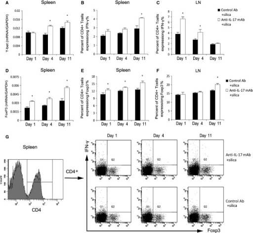 IL-17 may regulate silica-induced lung inflammation by modulating the Th immune balance. The levels of T-bet (A) and Foxp3 mRNA (D) in the spleen were assayed by real-time RT-PCR using the −ΔΔCt method (n = 4). Th1 cells in the spleen (B and G) and hilar lymph nodes (HLNs; C) were calculated by flow cytometry, and the percentage of CD4 + IFN-γ+ T cells was plotted (B and C; n = 4). Tregs in the spleen (E and G) and HLNs (F) were calculated by flow cytometry, and the percentage of CD4 + IFN-γ+ T cells was plotted (E and F; n = 4). Results are represented as means ± SEM (*P < 0.05 versus the control Ab + silica group)).
