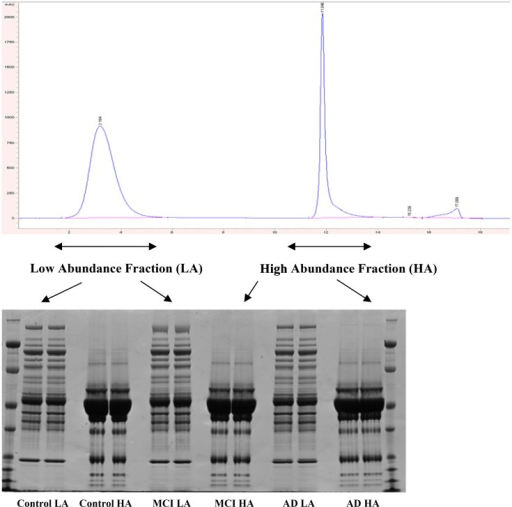 Chromatogram of fractionation using Hu6 column and 1D SDS/PAGE of these fractions.Low abundant proteins are eluted first (first peak on chromatogram) and high abundant proteins are eluted after (second peak). Gel shows significant depletion of high abundant proteins in the low abundant fractions. Loading was 50 μg/lane. First and last lanes contained molecular weight markers. Each fraction was run in duplicate.