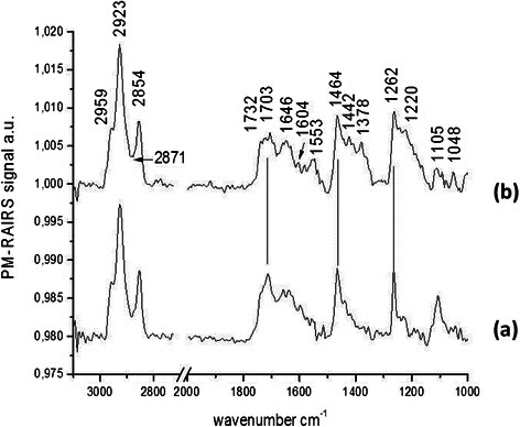 PM-RAIRS spectra of the two consecutive steps leading to the immobilization Phe-NH2. Spectrum (a) represents the control Au–MUA and spectrum (b) is associated to the covalent binding of the CAR derivative.