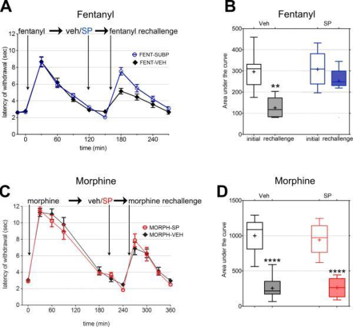 SP Reduces Acute Tolerance to Fentanyl, but Not Morphine(A) Time course of fentanyl-induced antinociceptive responses. An increase in tail-withdrawal latencies denotes antinociception. The response after the second fentanyl injection is higher in SP-injected mice. Results are mean ± SEM (n = 9).(B) Graph of areas under the curve for initial response and rechallenge for each condition.(C) Time course of morphine-induced anti-nociceptive responses. Unlike fentanyl, the second morphine injection resulted in a lower response for both the vehicle control and SP-injected mice (mean ± SEM; n = 10 and 11).(D) Graph of areas under the curve as in (B). See also Figure S3.All error bars are ±SEM.