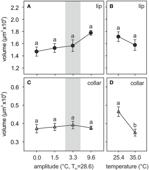 Temperature effects on the adult MB calyx volume. (A,B) Volume of the olfactory lip and (C,D) the visual collar input regions of the MB calyces of ants reared at (A,C) different amplitudes of fluctuating temperature but the same mean temperature or (B,D) different constant temperature regimes. Gray area shows the temperature regime selected by nurses for brood translocation. Symbols represent the mean value of each group and lines the S.E. Different letters indicate significant differences among treatments with different amplitudes or between those with different constant temperatures. Lip and collar: N0 = 13, N1.5 = 9, N3.3 = 12, N9.6 = 10, N25.4 = 14, N35 = 12.