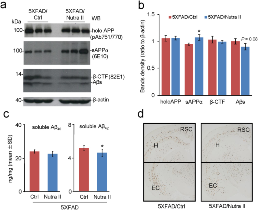 Nutra II slightly decreases levels of Aβ, β-CTF, and Aβ plaque deposition in 5XFAD mice - After Nutra II treatment, 5XFAD mice were sacrificed for analysis of holo APP, sAPPα, β-CTF, Aβs and β-actin as control in brain homogenates using WB analysis. Untreated 5XFAD mice were also sacrificed for analysis as control. Representative WB shows holo APP, as determined by pAb751/770, sAPPα, as determined by 6E10, β-CTF and Aβ, as determined by 82E1, and β-actin, as determined by β-actin specific antibodies in triplicate (a). Full non-adjusted images of WB shown in Fig. S1 (Fig. S1.pdf). The band density was calculated by using Image J (b). Aβ1-40/42 concentrations in mouse brain homogenates from Nutra II treated and untreated 5XFAD mice were also determined by ELISA (c). Aβ plaques in hippocampal (H), entorhinal cortex (EC) and retrosplenial cortex (RSC) was examined by immunohistochemistry staining using 4G8 (d).