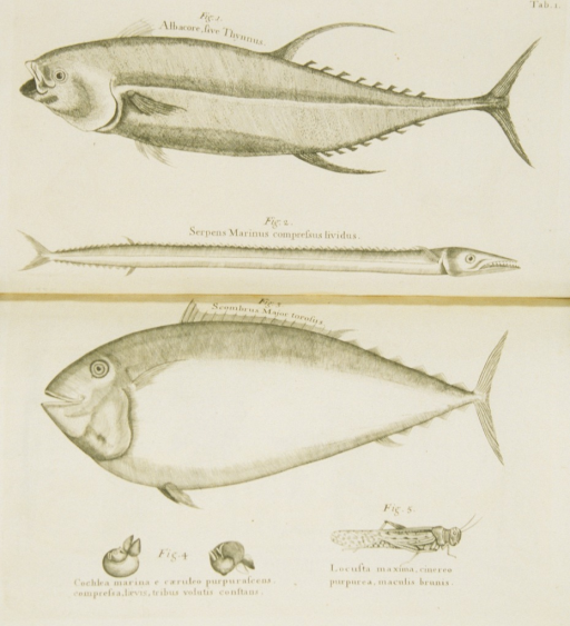 <p>Illustrations of tuna, mackerel, water snake, snails, and locust.</p>