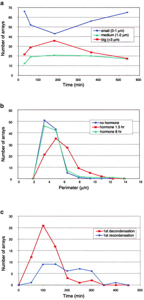 Arrays increase in size after hormone treatment and then later decrease. (a) Array size by GFP-GR versus time after hormone. Changes in array size were detected by GFP-GR as a function of time. Cells were treated with 100 nM dexamethasone at time 0 and then fixed in paraformaldehyde at the time points shown. At each time point, 100 cells containing arrays were randomly selected and then the arrays were classified into one of three size ranges. (b) Changes in array size detected by DNA FISH before hormone and 1.5 or 8 h after hormone. For each treatment, 100 cells were randomly selected and then the perimeter of the array in each cell was measured. Note that by 8 h after hormone treatment, arrays have recondensed to the prehormone state. (c) Times of array decondensation and recondensation by live cell analysis. Histogram plot showing times at which arrays showed the first significant signs of either decondensation or condensation. These data were obtained from 128 time-lapse movies of individual cells. On average, decondensation occurred before condensation. Of 22 movies that were long enough to capture both decondensation and condensation, 21 showed a single decondensation followed by a single recondensation (see text).