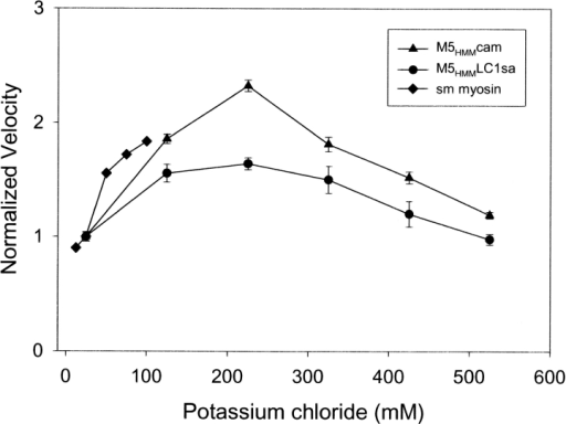 The ionic strength dependence of M5HMM in vitro motility. Normalized filament velocity (mean ±SEM, n > 10 filaments) as a function of added potassium chloride for M5HMM expressed with LC1sa (•) and calmodulin (▴) (M5HMM loading concentration of 10–25 μg/ml). Normalized filament velocity as a function of added potassium chloride for smooth muscle myosin II (♦) from Harris and Warshaw (1992) for comparison (loading concentration of 100 μg/ml). Note the reduction in actin filament velocity at potassium chloride concentrations <125 mM for both M5HMM and myosin II. Also note the plateau at physiological ionic strengths and greater (between 125 mM and 325 mM potassium chloride) for M5HMM. Velocities were normalized to the velocity at 25 mM potassium chloride. A similar dependence of actin filament velocity was observed regardless of light chain content.