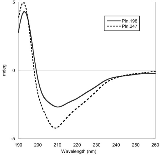 Circular dichroism of 5.6 μM Pln.198 and 8.4 μM Pln.247 in 25 mM HEPES, 100 mM NaCl, pH 7.4 with baseline subtraction and FFT filter. The differences in the spectra suggest a structural difference in the two proteins, likely due to the addition of the 47 amino acids on Pln.247 that form a cysteine knot.