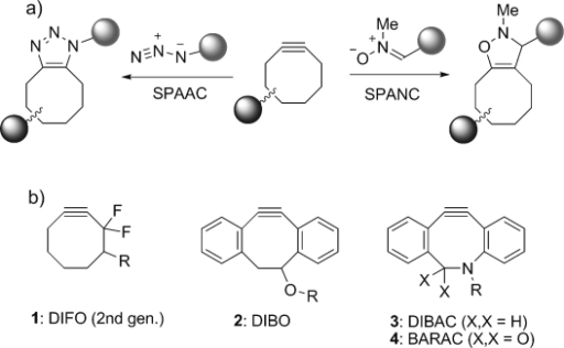 Reactions and structures of cyclooctyne compounds for strain-promoted cycloaddition. a) Cycloaddition with azide (SPAAC) or nitrone (SPANC). b) Structures of the most commonly employed cyclooctynes.