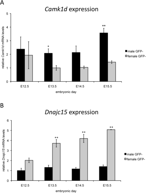 Expression analysis of Camk1d and Dnajc15 in developing mouse gonads.Expression analysis was performed on cDNA from sorted GFP- (somatic) cells derived from male and female mouse gonads, embryonic days 12.5–15.5. The data is normalised such that the lowest expression is 1.0, and represent mean values ±SEM from three independent experiments. Shown here are the expression patterns for a) Camk1d and b) Dnajc15. Comparisons between male and female expression for Camk1d and Dnajc15 were performed with a 2-tailed t-test. ** p<0.005; * p<0.05.