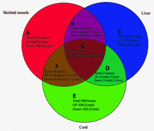 Venn diagram depicting the differentially expressed gen open i venn diagram depicting the differentially expressed genes in skeletal muscle 850 genes liver ccuart Image collections