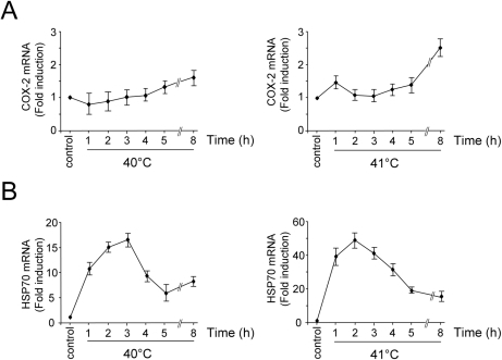 Time-course of COX-2 expression at febrile temperatures in endothelial cells.HUVECs were either kept at 37°C (control) or were incubated at 40 and 41°C as described in Material and Methods. At different times total RNA was extracted and levels of COX-2 (A) and HSP70 (B) were analyzed by real-time PCR. Relative quantities of COX-2 and HSP70 RNAs were normalized to β-actin. All reactions were made in duplicates using samples derived from at least three biological repeats. Error bars indicate ± S.D. Fold induction was calculated by comparing the induction of the indicated genes in the treated samples to the relative control, which was arbitrarily set to 1.