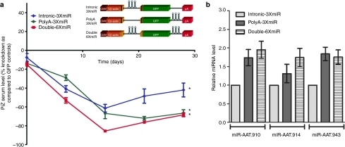 In vivo optimization of anti-AAT miRNA delivery within rAAV9 vectors. (a) Transgenic mice expressing the human PiZ allele were injected with 5 × 1011 virus particles or rAAV9 expressing miRNAs against AAT under the control of the hybrid chicken β-actin promoter via the tail vein. Serums from each cohort were collected on a weekly basis and were used to assess Z-AAT concentration by ELISA. (b) Quantitative RT-PCR for artificial miRNA was quantified from total RNA obtained from mouse livers. RT-PCR was used to assay for the presence of the three artificial anti-AAT miRNAs from mice receiving rAAV9-miRNA vectors. * ≤0.05 as determined by a two-way unpaired Student's t-test. AAT, α-1 antitrypsin; CMV, cytomegalovirus; ELISA, enzyme-linked immunosorbent assay; GFP, green fluorescent protein; miRNA, microRNA; rAAV, recombinant adeno-associated virus; RT-PCR, reverse transcriptase-PCR.
