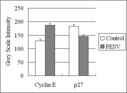 Grey Scale Intensity variants evaluated by Leica QWin V3 software of Cyclin E and p27 immunoreactivity in DU145 cells treated with PESV and control group. Higher grey scale intensity standing for weaker protein expression, and lower, sronger protein expression.
