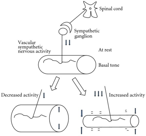 Tonic activities of vascular sympathetic nerves at various levels allow for regulation of flow rate. Basal tone at rest increased by sympathetic nervous activation produces vasoconstriction and a decrease in blood flow rate (an increase in resistance). When basal tone is inactivated, vasodilatation, an increase in flow rate (a decrease in resistance), is produced.