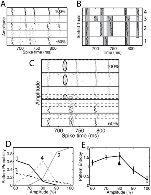 Bifurcation points led to multiple spike patterns that persisted across multiple amplitudes.(A) The rastergram for the data shown in Figure 2A for amplitudes between 60% and 100% and during the time segment between 650 ms and 850 ms. (B) The analysis procedure suggested that there were four clusters, each corresponding to a spike pattern. We show the rastergram with the trials sorted according to their cluster membership. The numbers on the right side are the cluster index. The gray vertical bands show the detected events that remained after applying a procedure to merge events common to multiple clusters. We used the value tISI = 3 ms to detect the events using the interval method and the value tROC = 0.50 to find and merge common events. (C) Rastergram of the clustered data shown in panel A. Each block (separated by thick black lines) corresponds to a different amplitude, with the lowest amplitude at the bottom and the highest amplitude at the top. Within each block, the trials are ordered based on their cluster membership. The clusters are separated by thin dashed lines. Two events are highlighted: the ones in the black ellipses, whose reliability increased with amplitude and the ones in the gray ellipses, whose reliability decreased with amplitude. (D) The pattern occupation (or probability) for a given amplitude is the fraction of trials on which that pattern is obtained. We show the pattern occupation as a function of amplitude for the four patterns that were detected, as indicated by the numbers in the graph. (E) The diversity of patterns observed for a given value of the amplitude is quantified as the entropy of the pattern distribution. The entropy as a function of amplitude has a peak at 80% (arrow), indicating that the pattern diversity is largest for that amplitude. The error bars represent the standard deviation of the entropy determined using a resampling procedure (see Methods). There is no correction for the bias, which took values between 0.02 and 0.05 bits.