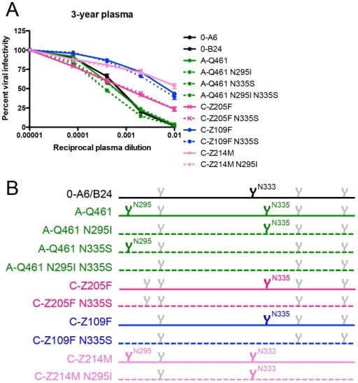 Contribution of specific glycans to heterologous neutralization breadth in R880F.To gauge if nAb responses continued to exert pressure, specifically against escape glycans, on the N- and C-terminal V3 flanks of envelope during long-term HIV-1 infection, wild-type (solid lines) and site-directed mutant (dashed lines) heterologous Envs were pseudotyped and assayed for neutralization with 3-year R880F autologous plasma (A). Percent viral infectivity, as adjusted against wells containing no test plasma, is depicted on the vertical axis; reciprocal plasma dilutions are plotted along the horizontal axis in a logarithmic fashion. Each curve represents a single Env-plasma combination, and error bars demonstrate the standard error of the mean of two independent experiments using duplicate wells. In (B), the V3/alpha2 helix portion of the labeled Envs has been conceptualized with glycan forks, each of which represents a PNGS in the corresponding amino acid sequences. Glycans of particular interest (N295, N333, and N335) are designated using R880F-specific numbering.