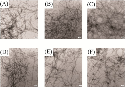 Ketoprofen does not inhibit amyloid formation by human amylin.TEM images of samples recorded after incubating amylin with varyingamount of ketoprofen for 42 h. Scale bars represent 100 nm. (A) Amylinalone. (B) Mixture of amylin with a 20-fold excess of ketoprofen.(C) Mixture of amylin with a 10-fold excess of ketoprofen. (D) Mixtureof amylin with a 5-fold excess of ketoprofen. (E) Mixture of amylinwith a 2-fold excess of ketoprofen. (F) Mixture of amylin with anequimolar amount of ketoprofen. Experiments were conducted at pH 7.4and 25 °C in 20 mM Tris buffer with 0.25% DMSO (v/v) in the absenceof any fluorinated alcohol cosolvent. The concentration of amylinwas 16 μM.