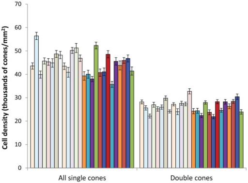 Between-individual variation in absolute densities of double and single cone photoreceptor densities.Each bar represents the mean and standard error for an individual. Light bars are females (n = 13), dark bars are males (n = 13).