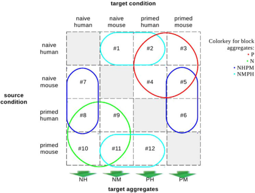 All pairwise comparisons of conditions, and aggregates thereof.A comparison has a source and a target condition. For example, for comparison #1, NH is the source and NM is the target condition. Aggregates of comparisons are defined as follows. (a) by target condition (NH, NM, PH, PM), and (b) block-wise. The latter are subdivided into the natural blocks naïve (N, green) and primed (P, red) and the mixed ones NHPM (blue) and NMPH (cyan), see also Supplementary Table S1. Target aggregates are indicated by arrows below the columns; all comparisons within a column constitute a single target aggregate. Block aggregates are indicated by enclosing coloured circles and rounded rectangles. All comparisons that are enclosed within a shape of a given colour are part of the aggregate that is associated with that colour; a comparison may be part of multiple aggregates. For example, N (green) aggregates comparisons with target naïve (regardless of species, but excluding naïve as the source), NH aggregates all comparisons with target NH, and NHPM allows checking the hypothesis that NH and PM have properties in common. LinkScore calculations for a comparison estimate which links between genes start up during the transition from source to target. For each comparison, the top-scoring links form its link set, which in turn gives rise to a corresponding gene set.