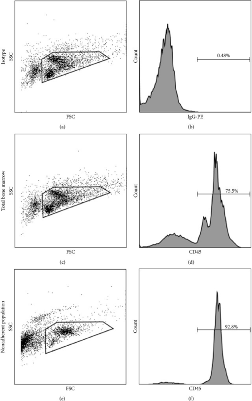 Adherence culture enriched for the HSC-derived population in the nonadherent fraction of bone marrow. Flow cytometric analysis of CD45 expression in total bone marrow was compared to that in the 96-hour nonadherent bone marrow population. A representative analysis is shown. Panel (a) shows forward and side scatter gate and Panel (b) shows isotype control for CD45 staining gated on the live, propidium iodide (PI) negative population. A representative analysis of CD45 expression by total bone marrow is shown where Panel (c) depicts the forward and side scatter gate and Panel (d) shows CD45 staining gated on the live, PI negative population. Panel (e) depicts the forward scatter and side scatter gate for the nonadherent bone marrow fraction, and Panel (f) shows the CD45 staining gated on the live, PI negative population.