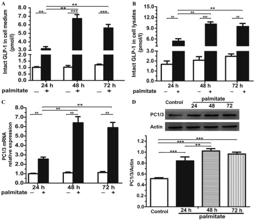 Prolonged exposure to palmitate induces the activation of the glucagon-like peptide-1 (GLP-1) system in isolated mouse islets. After the islet cells were incubated with 0.5 mmol/l palmitate for the indicated periods of time, the GLP-1 levels in the (A) cell medium and (B) lysates were determined by insulin enzyme-linked immunosorbent assay (ELISA), and (C) prohormone convertase 1/3 (PC1/3) mRNA expression in cell lysates was determined by qPCR and (D) the PC1/3 protein level was determined by immunoblot anlaysis. n=3 separate islet preparations; **p<0.01; ***p<0.001.