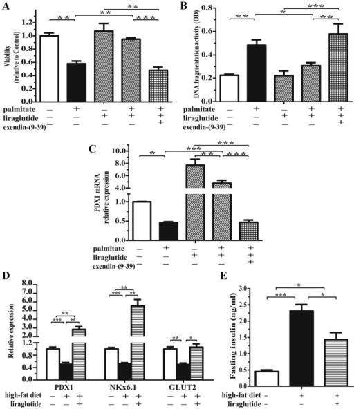 The glucagon-like peptide-1 receptor (GLP-1R) signaling agonist, liraglutide, attenuates lipotoxicity-induced islet dysfunction. Isolated non-diabetic islets were pre-treated with 100 nmol/l liraglutide and/or 0.5 µmol/l exendin-(9-39) for 2 h, followed by exposure to 0.5 mmol/l palmitate for 48 h. Islet (A) viability (detected by MTT assay) and (B) apoptosis (determined by examining histone-associated DNA fragments), and (C) pancreatic duodenal homeobox 1 (PDX1) mRNA levels (detected by qPCR). n=3 separate islet preparations. (D) After 8 weeks on their respective diets, the mRNA expression of PDX1, glucose transporter 2 (GLUT2) and Nkx6.1 was detected in the pancreata of the mice. (E) The plasma insulin levels were detected by insulin enzyme-linked immunosorbent assay (ELISA). n=6–7 mice/group; *p<0.05; **p<0.01; ***p<0.001.