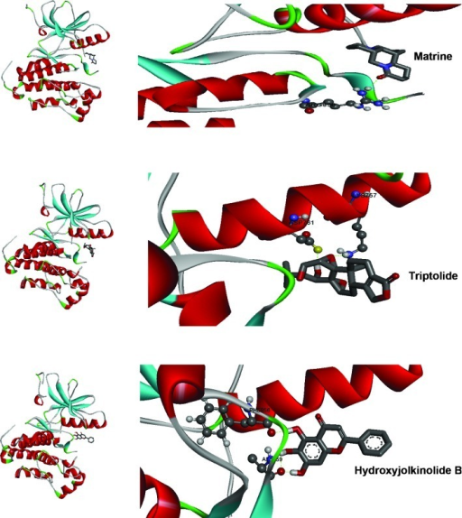 Top binding modes of the three lead Traditional Chinese Medicinal compounds with the active site of epidermal growth factor receptor.
