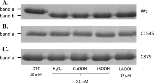 Non-reducing SDS-PAGE gels showing the effect of DTT and hydroperoxide treatments on MfOhrdel (A), MfOhrdel C154S (B) and MfOhrdel C87S (C). 10 µM of each protein were incubated during 1 h at 37 °C with 10 mM DTT, 0.1 mM H2O2, CuOOH or tBOOH or 17 µM linoleic acid hydroperoxide (LAOOH). All reactions were carried out in a buffer containing 0.5 M NaCl, 20 mM sodium phosphate pH 7.4 and 1 mM DTPA. Immediately after DTT or hydroperoxides treatments, all the samples were alkylated with NEM (100 mM) for 1 h at room temperature to avoid oxidation artefacts due to protein denaturation by SDS.