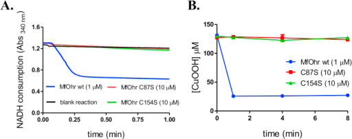 Comparison of the peroxidase activities of MfOhrdel and the C87S and C154S mutants. A. Lipoamide/lipoamide dehydrogenase coupled assay. The reactions were performed at 37 °C with 1 µM MfOhrdel (blue line) or 10 µM mutant proteins (C87S, red line or C154S, green line), in the presence of 50 µM reduced lipoamide, 100 µM DTPA, 0.5 µM XfLpd and 200 µM NADH in 50 µM sodium phosphate pH 7.4. Reactions were initiated by addition of 200 µM CuOOH. Blank reaction (black line) was performed without enzyme. B. The consumption of CuOOH was monitored during 8 min using FOX assay. The reactions were carried out in the presence of 1 µM (MfOhrdel) or 10 µM (C154S or C86S) enzymes. The control reactions for each tested hydroperoxide (enzyme+peroxide without DTT) and (hydroperoxide+DTT without enzyme) are not showed here. The figure is representative of at least two independent sets of experiments. (For interpretation of the references to color in this figure legend, the reader is referred to the web version of this article).
