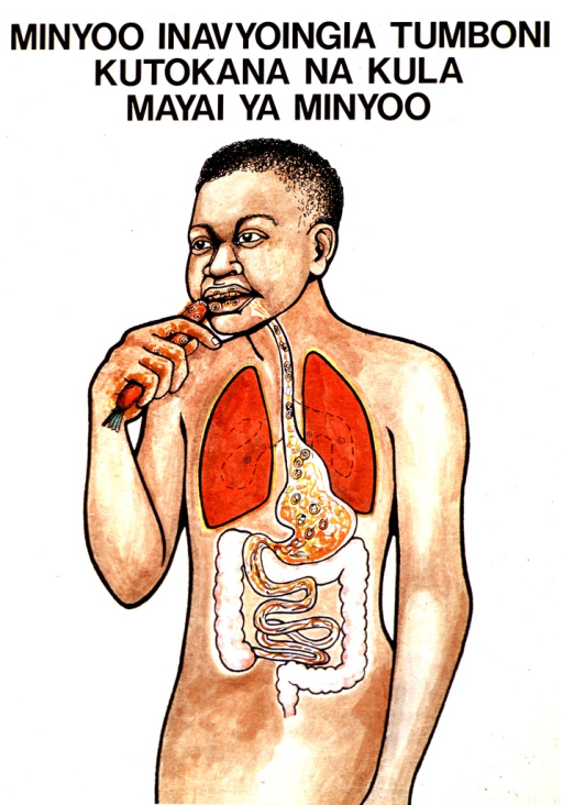 <p>White poster with black lettering.  Title at top of poster.  Title indicates that intestinal worms get in the stomach as a result of eating worm eggs.  Visual image is a color illustration of a man eating a carrot.  There are several small circles on the carrot, suggestive of eggs.  The man's esophagus and gut are shown and the eggs transform into worms as they reach the small intestine.  Publisher and sponsor information on verso.</p>