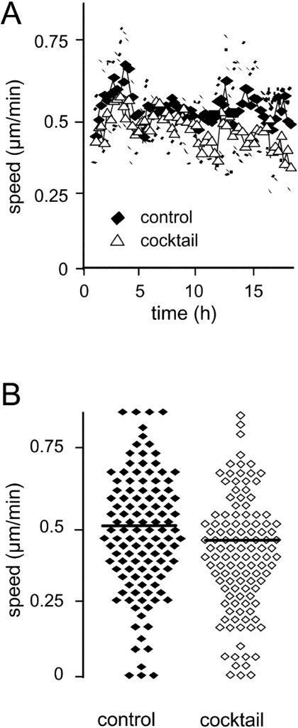 Sustained migration in the presence of protease inhibitor cocktail. (A) Cell tracking analysis of the steady-state population speed ± SD and (B) mean speed for each individual cell (time, 20 h; n = 3 experiments, 120 cells).