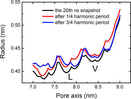 Pore Radius Profiles versus Position along the Pore AxisThree curves were produced on the basis of Cα atoms of M2 helices from the 20th ns snapshot as well as the structures resulting from the NMA on this snapshot.