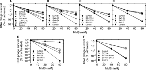 Reactivation of MMS-treated bacteriophages by expression of AlkB proteins in E. coli. (A) Reactivation of methylated ssRNA phage MS2 by AlkB proteins from GVA, BVY, BlScV, LChV-2 or CLBV. Reactivation of methylated MS2 by different variants of AlkB from (B) GVA, (C) BlScV and (D) BVY. (E) Reactivation of methylated ssDNA phage M13 by GVA-36, BVY-36 and BlScV-94. (F) Reactivation of methylated MS2 by BVY-94 and mutants BVY-94-H59A and BVY-94-D61A. Expression plasmid pJB658 without insert was used as control. Error bars in B–D represent the standard deviation of triplicate measurements.