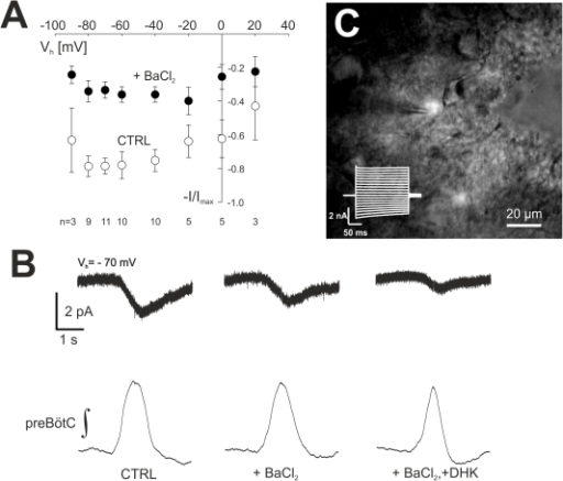 Analysis of respiratory-rhythmic astrocytic currents (Iresp,A).In panel (A) the effect of BaCl2 on Iresp,A is shown. Data, for each cell normalized (I/Imax) to the largest current measured over the range of holding potentials, are given for the different holding potentials from −90 mV to +20 mV. Error bars indicate mean ± SEM. The number of cells is indicated below each set of data points. Panel (B) shows cycle-averaged currents (holding potential −70 mV) that were recorded from the rhythmic astrocyte (C) under control conditions, in the presence of barium (BaCl2, 100 µM) and after additional inhibition of glutamate uptake by dihydrokainate (DHK, 300 µM). The cycle-averaged traces of the corresponding integrated preBötC field potential are depicted underneath.