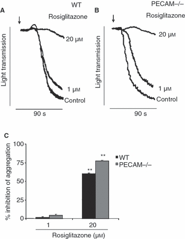Inhibitory effect of collagen-stimulated platelet aggregation by peroxisome proliferator-activated receptor-γ (PPARγ) ligands is not platelet endothelial cell adhesion molecule-1 (PECAM-1) dependent. Washed platelets obtained from wild-type (WT) mice (A) and PECAM-1-deficient mice (B) were treated with PPARγ ligand rosiglitazone (1, 20 μmol L−1) or vehicle [DMSO 0.1% (v/v)] and stimulated with collagen (1.0 μg mL−1). Aggregation was measured under constant stirring conditions at 37 °C. Representative aggregation traces (A–B) and cumulative data (C) represent the percentage of inhibition compared with control. Numerical data represent, mean ± SEM (n = 3) t-test **P ≤ 0.01.
