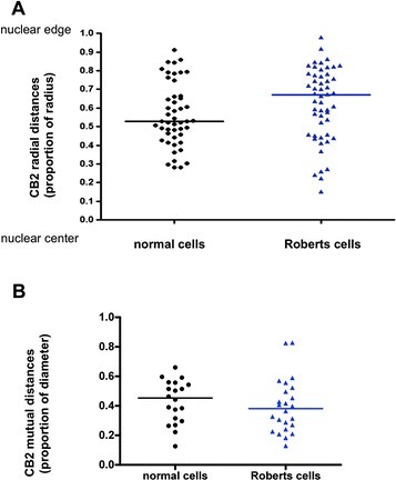 Statistical representation of CB2 radial and mutual positions. (A): Distribution of each PH1 (=CB2 probe) radial position of normal cells (black rings) and Roberts cells (blue triangles). The median was calculated both for normal cells (Mrn, black line) and Roberts cells (MrR, blue line). Radial distances are expressed as a proportion of the radius. Mrn = 0.5285 and MrR = 0.6700: Wilcoxon test was significant (alpha = 0.05) with a p value of 0.0018 showing a significant relocation of PH1 territory towards the edge of the nucleus in Roberts cells. (B): Distribution of CB2 mutual position of normal and Roberts cells. The median was calculated both for normal cells (Mmn,black line) and Roberts cells (MmR, blue line). Mutual distances are expressed as a proportion of the diameter. Mmn = 0.4527 and MmR = 0.3813: Wilcoxon test was significant (alpha = 0.05) with a p value of 0.0829 showing a significant rapprochement of homologous PH1 territories in Roberts cells.