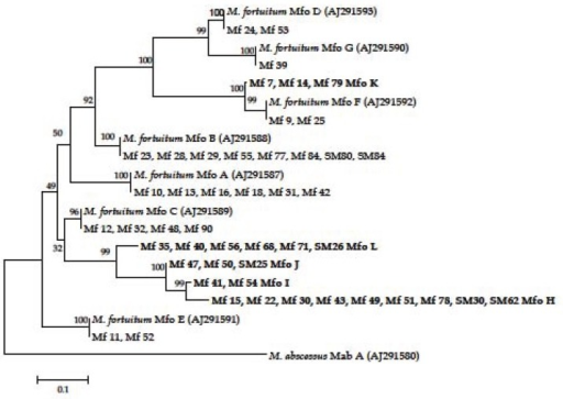 Distance matrix tree showing the divergence of ITS sequences of the Iranaian clinical isolates of M. fortuitum. All alignment positions which are occupied by residues were used for the calculation of binary distance values. The topology of the tree was evaluated and corrected according to the results of maximum-parsimony and maximum-likelihood analyses. The bar represents 0.1 estimated sequence divergence.