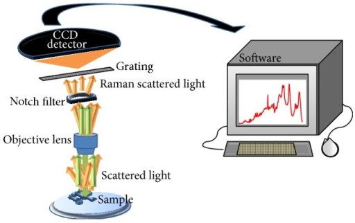 Schematic showing the process involved in Raman spectra collection. When the sample is illuminated by an incident monochromatic light, the majority of the scattered light is of the same wavelength—elastically scattered (green arrow). A notch filter is therefore used to block the elastically scattered light which would otherwise overwhelm the weak signal of the Raman or inelastically scattered light (orange arrow). The Raman scattered light may be dispersed according to wavelength through a grating and detected by a CCD (charge-coupled device) detector. A Raman spectrum is finally shown upon software analysis.