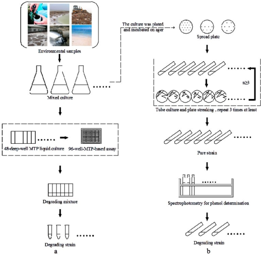 An integrated procedure for high-throughput screening. (a) High-throughput screening for the degrading strain; (b) Traditional method for the degrading strain.
