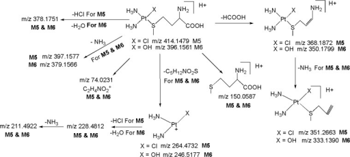 Proposed fragmentation mechanism for metabolites M5 and M6.