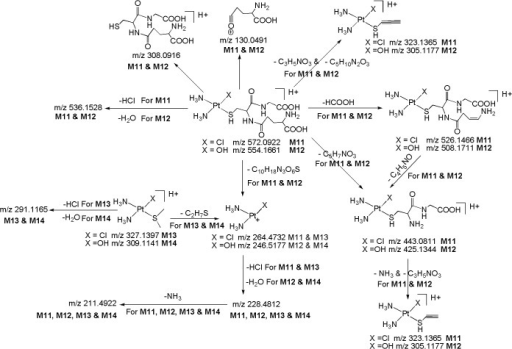 Proposed fragmentation mechanism for metabolites M11-M14.