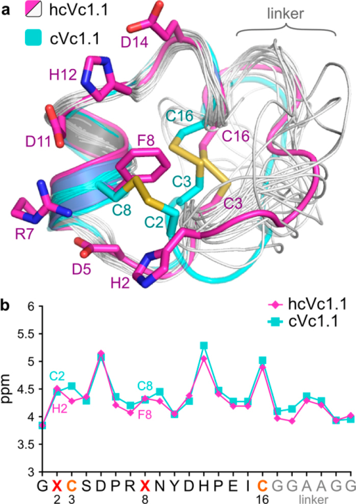 Comparison of the NMR solution structures of hcVc1.1 (pink and gray) and cVc1.1 (blue).(a) superimposition of the 20 minimum energy NMR models of hcVc1.1 and of the first NMR model of cVc1.1; the first lowest energy model of hcVc1.1 is in pink and the trace of the other models are in gray; the cVc1.1 lowest energy model is in blue. (b) Hα chemical shifts of hcVc1.1 and cVc1.1.