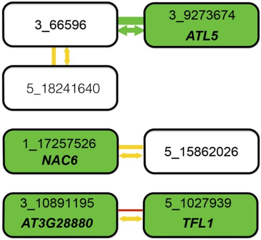 "Summary of combined statistical and functional support for loci underlying root length.Four epistatic pairs, involving seven unique loci (connected boxes), were identified at a genome-wide significance-threshold in a two-dimensional genome-wide GWA scan. Green, yellow, and red lines connect pairs of loci with very low (p = 0.003), intermediate (0.28 < p < 0.37), and high (p = 0.95) risk for the interaction being a false-positive when accounting for population size. The risk of the statistical epistatic association resulting from high-order LD to an unobserved functional variant in the genome (i.e. ""apparent epistasis"") is illustrated by arrow color, in which yellow indicates an intermediate risk (0.18 < p < 0.42) and green a very low risk (p = 0.0021). Green boxes indicate loci for which the T-DNA insertion line analyses suggest the named genes to be involved in root development. When considering the joint statistical and functional results, two pairs emerge as highly likely true positive two-locus associations: 3_66596/3_9273674 due to very strong statistical support and one identified functional candidate gene, and 3_10891195/5_1027939 where the identification of functional candidate genes at both loci suggest that the two-locus association in the original genome-wide scan is true despite the lower statistical support in after the conservative statistical correction for sample-size. For the other two pairs, the results are inconclusive. There is strong support for one of the two associated loci (3_66596 from its statistical interaction with 3_9273674 and 1_17257526 by the detection of the a functional candidate gene in the T-DNA analysis), but weaker support for the second locus. Further work is thus needed to conclude whether these pairs represent true positive two-locus associations, or whether they are false-positives due to the small population-size or high-order LD (""apparent epistasis"") to unknown functional variants."
